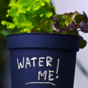 How and when to water your houseplant