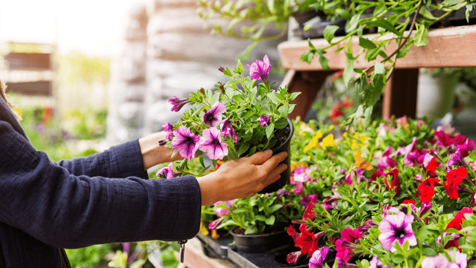 purchasing a plant for the first time