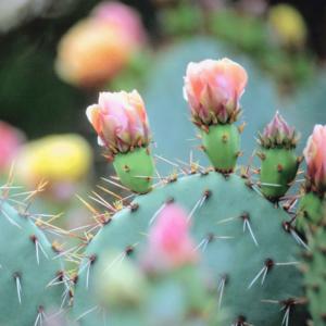 cactus indoor care